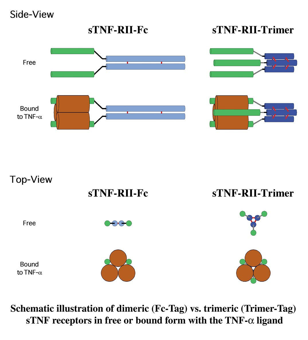trimer-vs-dimer-schematic-web.jpg