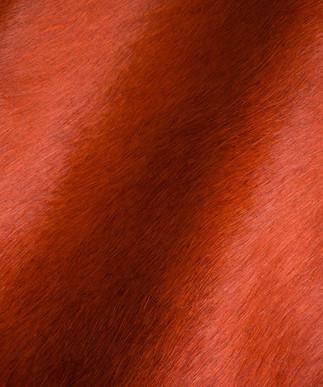 Hair on Hide Burnt Orange