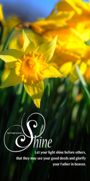 Church Banner featuring Daffodils with Let Your Light Shine Theme