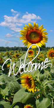 Church Banner featuring Field of Sunflowers for Welcome Banner