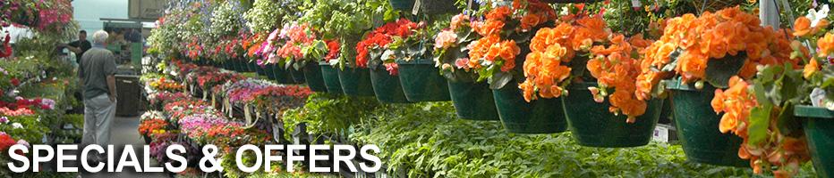 banner-specials.jpg