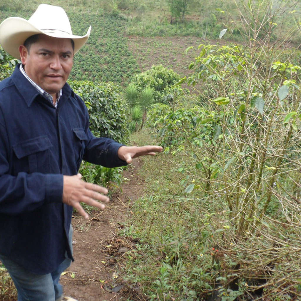 Cafe Campesino trading partner at the COMSA Cooperative in Honduras