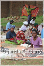 Uganda Peaberry Full City Roast Coffee