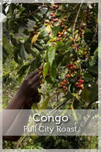 DR Congo Full City Roast Coffee