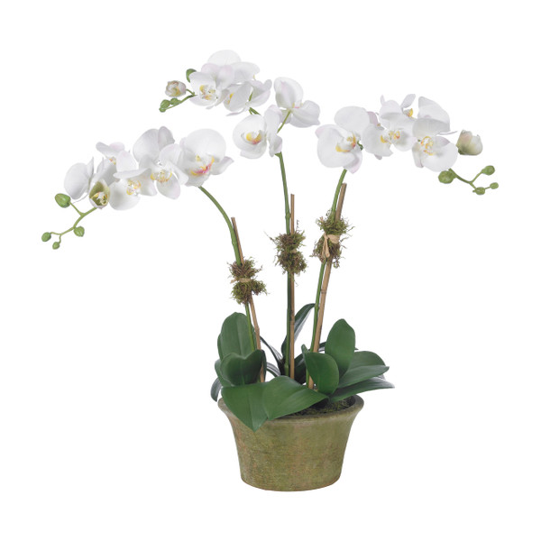 Diane James Home Blush Phalaenopsis Orchid