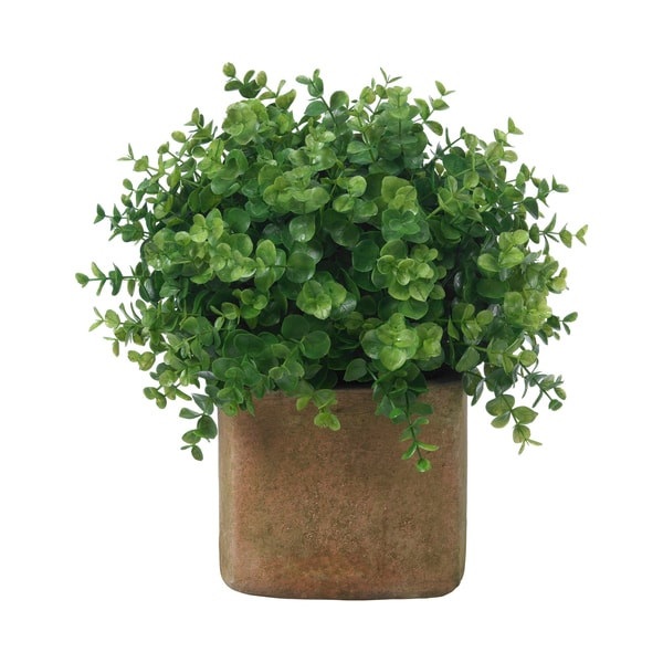 Diane James Home Boxwood Plant