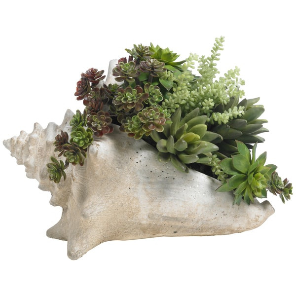 Diane James Home Succulents in Faux Shell