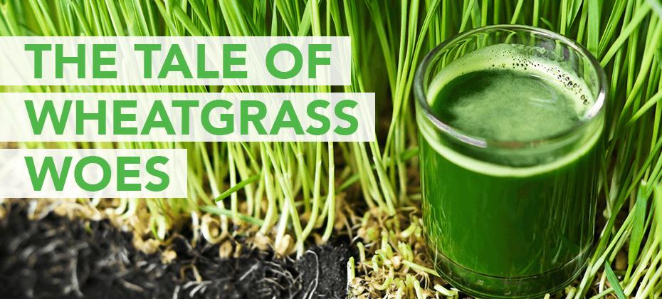 wheatgrass woes
