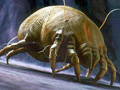 dustmite-enlarged.jpg