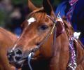horse-03.jpg