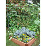 Veggie Wall Trellis Kit