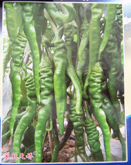 Chinese Space Hangijao 5 Chilli Seeds Image, Chillies on the Web