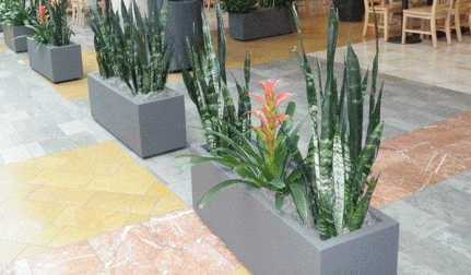 Shopping Mall Planters Westfield