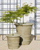 Urbino and Lucca Planter - Material : Cast Stone - Finish : Verde