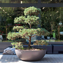 Bonsai Planter Landscape - Material : Fiber Cement - Finish : Anthracite Black