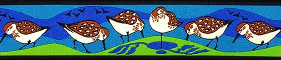 sandpipers-blue-lime-.jpg