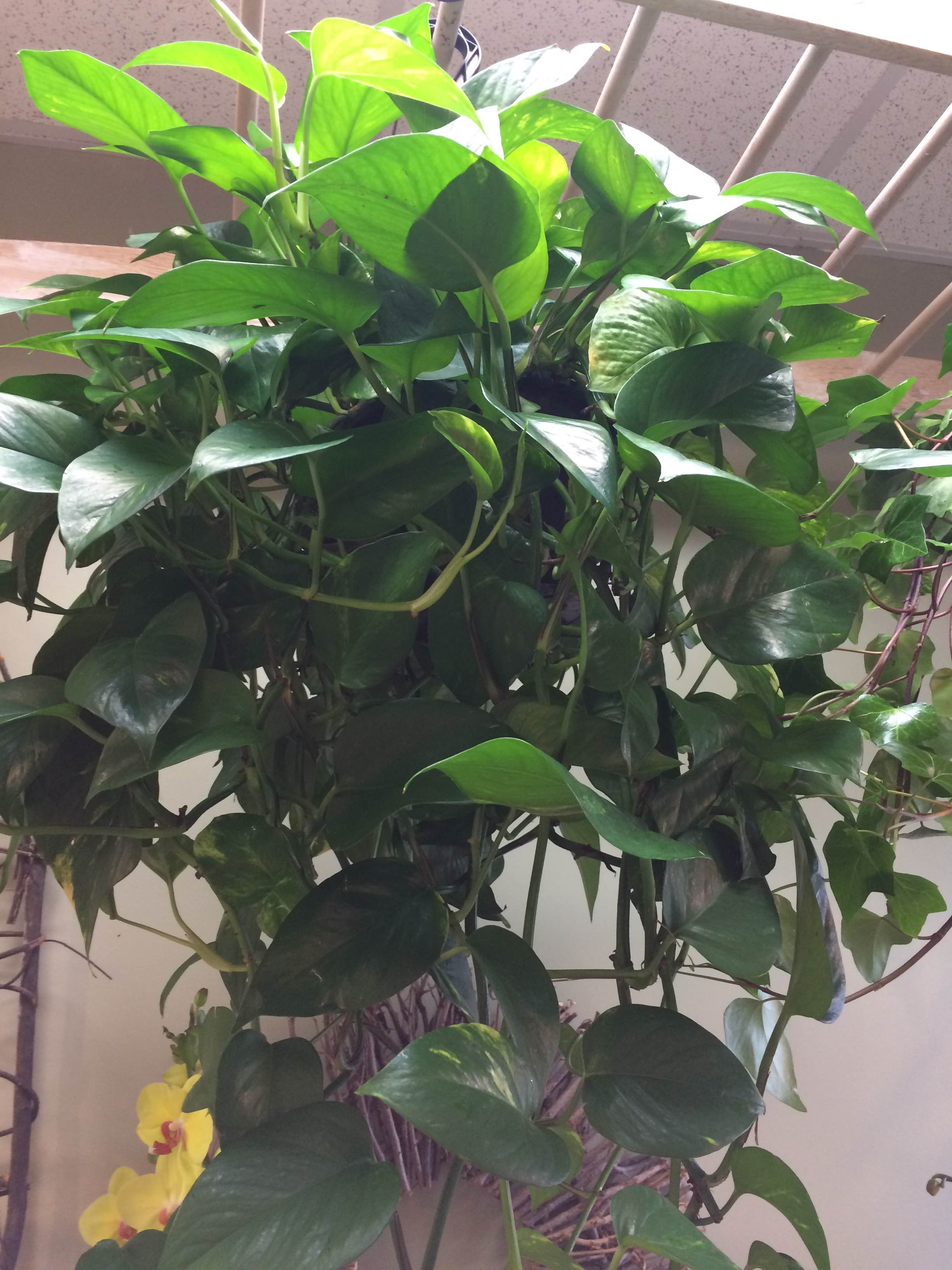 If You Work In An Office You Should Really Have Some Plants Around Since  They Not Only Improve The Air Quality, But They Increase Productivity In  The ...