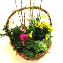 Blooming Plant Basket (Deluxe)