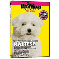 Maltese Everything You Should Know! Dog & Puppy Training Bonus - DD577724