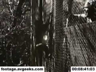 1940s stock footage - monkeys and people 2 on DVD
