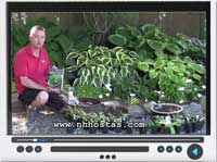 video-little-hostas.jpg