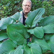 'Kingsize' Hosta Courtesy of Danny Van Eechaute
