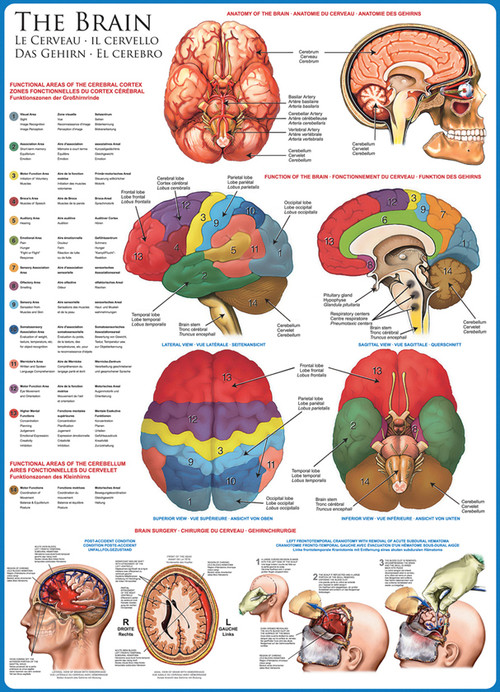 Eurographics The Brain Jigsaw Puzzle