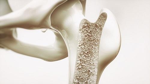 bone-metabolism-assays