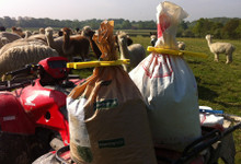 Feed Bag Clips