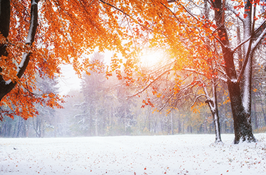 Fall/Winter Landscape with red leaves and snow on the ground