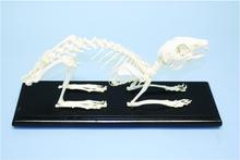 Skeleton - Rabbit