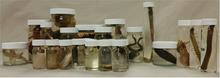 24 Specimen Jar Set Collection