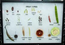 Fruit Types Display Mount_2