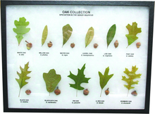 Oak Collection Display Mount