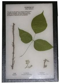 Poison Ivy Display Mount
