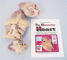 Heart Comparative Dissection Kit