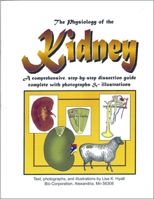 Kidney Dissection Reference Guide