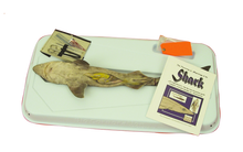 Shark-In-A-Box Kit