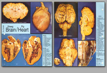Concise Dissection Chart - Brain/Heart