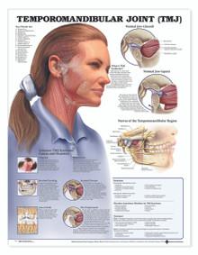 Reference Chart - Temporomandibular Joint (TMJ)