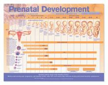 Reference Chart - Prenatal Development
