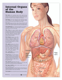 Reference Chart - Internal Organs of the Human Body