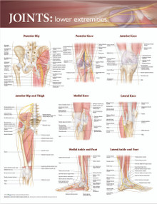 Reference Chart - Joints of the Lower Extremities