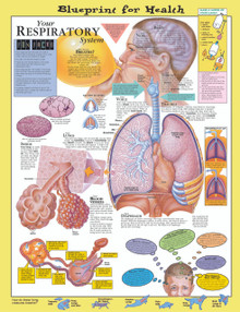Reference Chart - Elementary Your Respiratory