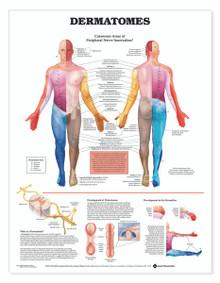 Reference Chart - Dermatomes