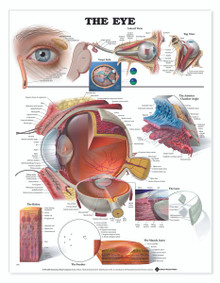 Reference Chart - The Eye