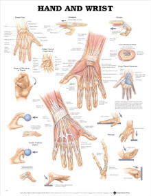 Reference Chart - Hand and Wrist