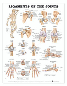 Reference Chart - Ligaments of the Joints