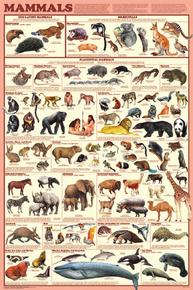 Display Chart - Mammals
