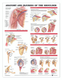 Reference Chart - Anatomy and Injuries of the Shoulder